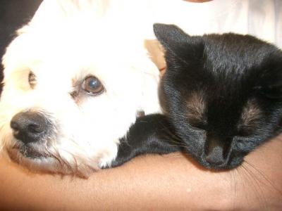 Mis Mascotas
