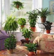 Consejo para el cuidado de tus plantas