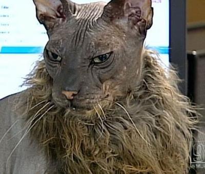 El Gato mas feo del mundo