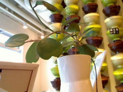 La planta bloguera